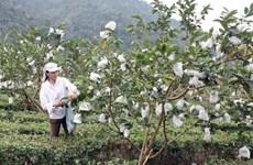 Près de 74 millions de dollars d'aides pour les paysans de Cao Bang et Bac Kan
