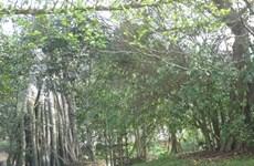 51.000 visiteurs étaient à la zone de vestige historique national spécial de Tân Trào