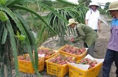 L'Australie peut importer des fruits du dragon et des crevettes vietnamiens