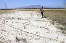 La FAO assiste des agriculteurs touchés par la sécheresse dans la province de Ninh Thuan
