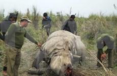 Espèces sauvages : le Vietnam a d'ores et déjà des contributions actives à la CITES