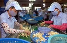 Record d'exportations de noix de cajou en 2016