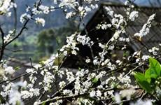 Rendez-vous à la 5e fête de la fleur de bauhinie 2017 à Diên Biên