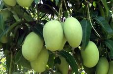 Le Vietnam exporte plus de 10.000 tonnes de fruits frais vers des marchés exigeants