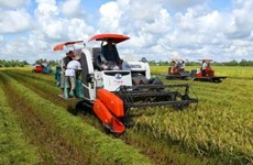 Can Tho et la République de Corée coopèrent dans la production de riz