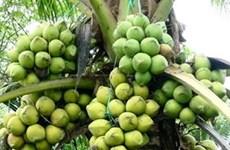 Tra Vinh aide ses PMEs à améliorer la valeur des produits à base de cocotier