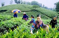 Le Festival du thé de Dai Tu à Thai Nguyên