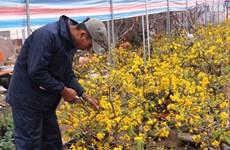 Hanoi : La foire printanière Dinh Dâu 2017 aura lieu du 18 au 25 janvier