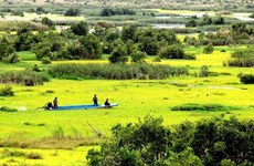 Plantation d'arbres submergés en écho à la Journée mondiale des zones humides