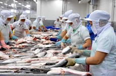 Bonne croissance des exportations vietnamiennes de poissons tra au Brésil