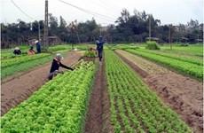Dà Nang: Planification de sept zones agricoles high-tech