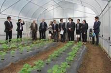 Agriculture : le Japon sonde des opportunités d'investissement à Hà Nam