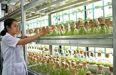 L'Australie et la région du delta du Mékong coopèrent dans l'agriculture