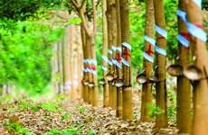 Les entreprises vietnamiennes élargissent leurs activités au Cambodge