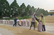 Plus de 4,5 millions de tonnes de riz exportées en neuf mois