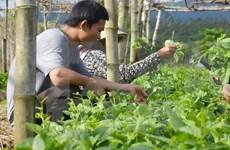 Agriculture : Dien Bien renforce la coopération avec des localités laotiennes