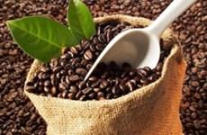 Café : le volume des exportations en baisse de près de 23% depuis janvier