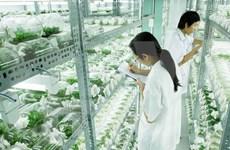"""Pour que l'agriculture high-tech du Vietnam """"sorte de la serre"""""""
