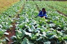 Export : les fruits et légumes et les noix de cajou frachissent le cap des 3 milliards de dollars