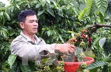 Le Vietnam élu au Comité exécutif de l'Association du café d'Asie