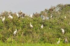 Plantation de 7.000 arbres à la Réserve de zones humides de Lang Sen, à Long An