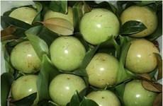 Les pommes de lait de Tiên Giang vont bientôt faire leur apparition aux Etats-Unis