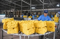 Le Vietnam, troisième exportateur mondial de caoutchouc