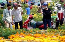 Têt : forte augmentation des importations de fleurs et de bonsaïs
