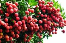 Les fruits vietnamiens sont de plus en plus attrayants aux États-Unis