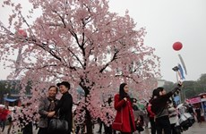 Une riche palette d'activités à la Fête d'échanges culturels Vietnam-Japon