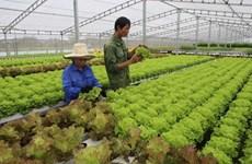 Son La : améliorer les revenus des agriculteurs grâce à la restructuration agricole