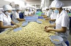 Forte hausse des exportations de noix de cajou au premier trimestre