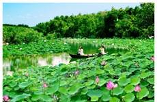 Dông Thap : la Fête des fleurs de lotus 2018