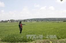 Octroi de plus de 160.000 tonnes de riz à la province de Kon Tum