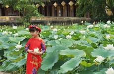 Une variété précieuse de lotus blancs se développe à Dai Noi