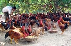 Hanoï met en place 80 chaînes d'approvisionnement en produits agricoles sains