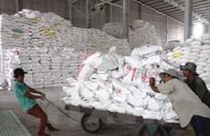 Perspective prometteuse pour les exportations de riz au quatrième trimestre