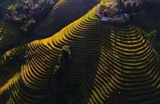 La beauté splendide des rizières en terrasse au district de Hoàng Su Phì à Hà Giang (Nord)