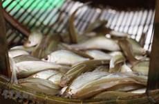 Des spécialités de la saison des crues dans le delta des Joncs