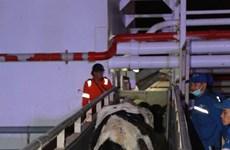 TH importe près de 1.800 vaches laitières des Etats-Unis