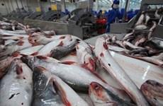 Forte hausse des exportations de pangasius vers la Chine