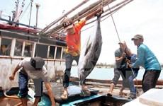 Construction d'un grand centre de pêche à Hai Phong