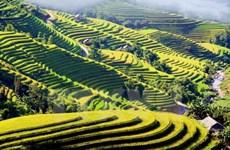 Semaine culturelle et touristique des rizières en terrasse de Hoàng Su Phi