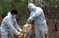 Le Vietnam disposé à endiguer le virus A(H7N9)