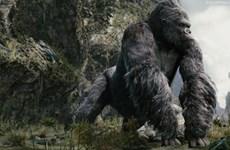 "Le film ""Kong: Skuld Island"" sera tourné au Vietnam"