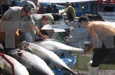 Construction de six grands centres de pêche