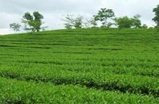 Le 3e Festival du thé de Thai Nguyên 2015