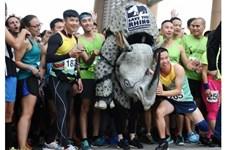 "Hanoi : ""Course pour les rhinocéros"""