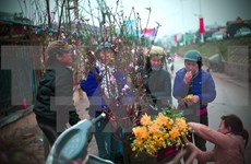 Les fleurs de pêchers du Nouvel An vietnamien