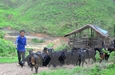 Vietnam : la réduction de la pauvreté est la 1ère priorité